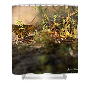 Wild Butterfly Shower Curtain