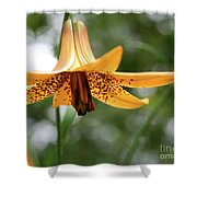 Wild Canadian Lily Shower Curtain