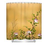 wild caper plant Capparis spinosa Shower Curtain
