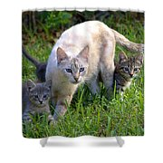 Wild Cats In Hialeah Shower Curtain