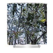 Wild Cherry Tree Blossoms On Verona Shower Curtain