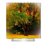 Wild Cherry Tree In Summer Sun Shower Curtain