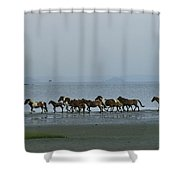 Wild Chincoteague Ponies Run Shower Curtain