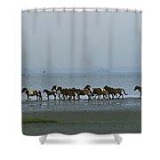 Wild Chincoteague Ponies Run Shower Curtain