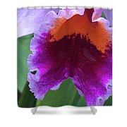 Wild Color Shower Curtain