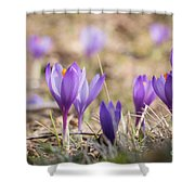 Wild Crocus Balkan Endemic Shower Curtain