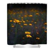 Wild Daisies Shower Curtain