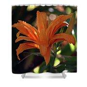 Wild Daylilies 1167 H_2 Shower Curtain