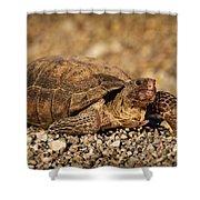 Wild Desert Tortoise Saguaro National Park Shower Curtain by Steve Gadomski