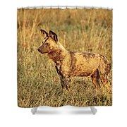 Wild Dog Of Botswana Shower Curtain