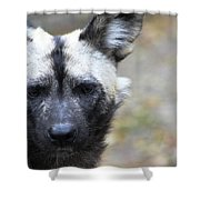 Wild Dog Shower Curtain