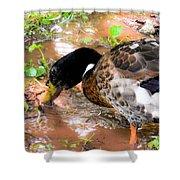 Wild Duck Mallard 1 Shower Curtain