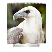 Wild Eagle Shower Curtain
