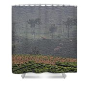 Wild Elephants, Valparai Shower Curtain