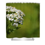 Wild Field Flowers Shower Curtain