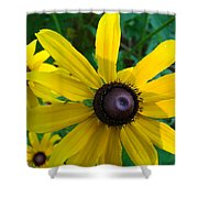 Brown Eyed Suzy  Shower Curtain