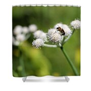Wild Flower Bluff Lake Ca 3 Shower Curtain