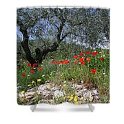 Wild Flowers And Olive Tree Shower Curtain