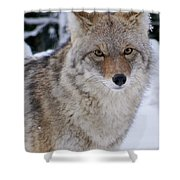 Wild Free And Beautiful Shower Curtain