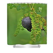 Wild Fruit Shower Curtain