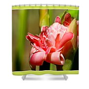 Wild Ginger Shower Curtain