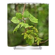Wild Grapes 1992 Shower Curtain