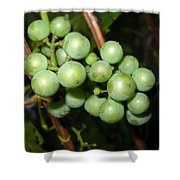 Wild Grapes In August Shower Curtain