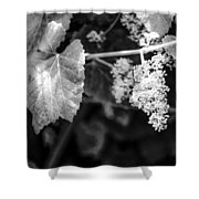 Wild Grapes In Light 2 Shower Curtain