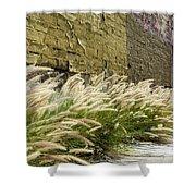Wild Grass Along An Alley Wall Shower Curtain