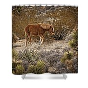 Wild Horse At Cold Creek Shower Curtain