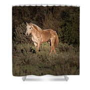 Wild Horse At Sunset Shower Curtain