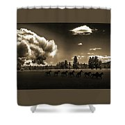 Wild Horse Fire, Sepia Shower Curtain