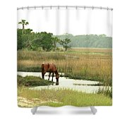 Wild Horse In Saltmarsh Shower Curtain