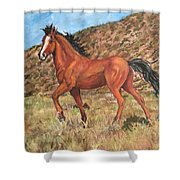Wild Horse In Virginia City, Nevada Shower Curtain