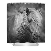Wild Horse Of Assateague Shower Curtain