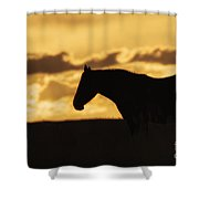 Wild Horse Sunrise Shower Curtain