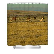 Wild Horses And Antelope-signed-#2216 Shower Curtain