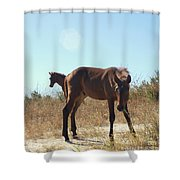 Wild Horses Desert Of Mexico Shower Curtain