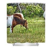 Wild Horses Of Assateague 5 Shower Curtain