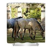 Wild Horses Of Cumberland Shower Curtain