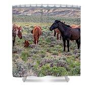 Wild Horses Of White Mountain Shower Curtain