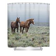 Wild Horses - Steens 1 Rw Shower Curtain