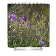 Wild Hyacinth At Sunset Shower Curtain