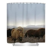Wild Icelandic Toelter Horses Shower Curtain