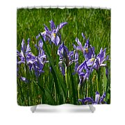 Wild Iris 1 Shower Curtain