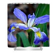 Wild Iris 3 Shower Curtain