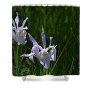 Wild Iris 4 Shower Curtain