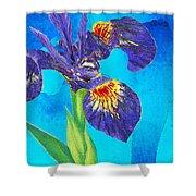 Wild Iris Art By Sharon Cummings Shower Curtain