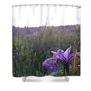 Wild Iris Shower Curtain