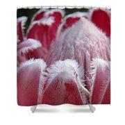 Wild King Protea Shower Curtain